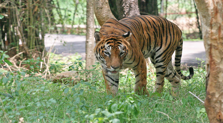 A Journey in search of Tiger